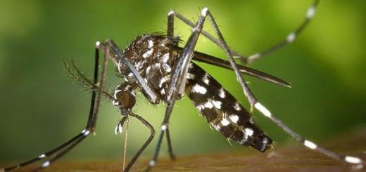 dengue_14-520x245